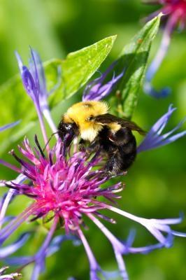 DIY Bee Box