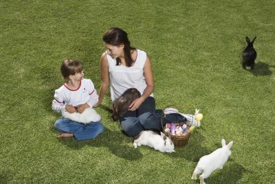 Hvordan å mate en vill babyen Rabbit