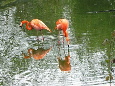 Liste over innfødte fugler i Florida