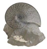 Typer av fossiler som er funnet i Appalachene