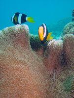 Ocean Bursdag Ideas