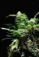 Planter og trær du finner i skogen