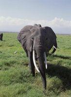 The Death of mammuter i pleistocen