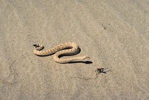 Hva er tre dyr funnet i en ørken?
