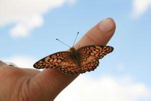 Hvordan bruke levende sommerfugler i et bryllup