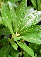 Virkningene av Ultra Violet Light On Plant Growth
