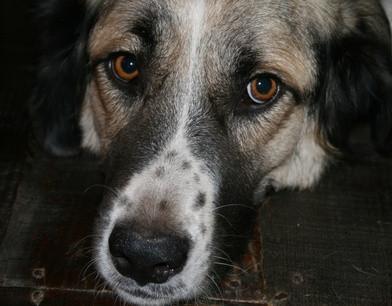 Hvordan fikse Pet Eyes i bilder