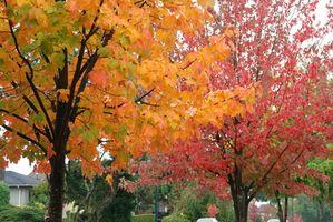 Fall Parade Float Ideas