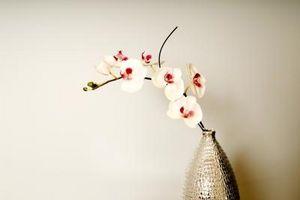 Hvordan lage en Orchid Spray med Gumpaste Flower