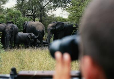 Habitat for en Bush Elephant