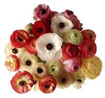 DIY Ranunculus Buketter
