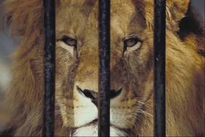 Hva skjer med Surplus Dyr i en dyrehage?