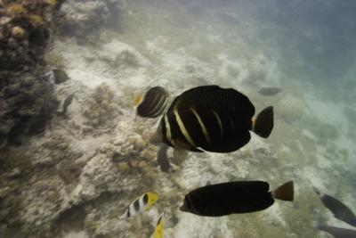 Kroppsdeler som hjelper fisken beveger seg i vannet