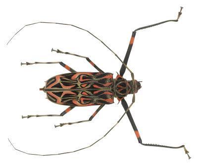 Hva slags bille Er Orange & Black?