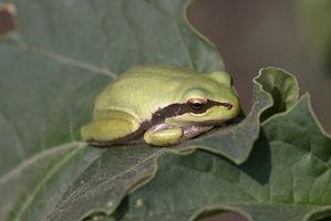 Frog Jumping Games