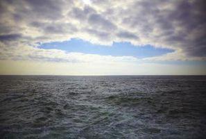 Hva er stigende Currents av næringsrikt vann fra bunnen av havet til overflaten kalles?
