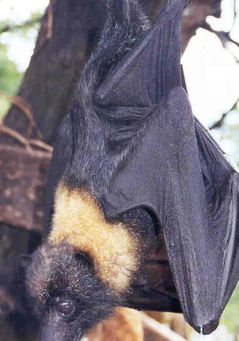 Life Cycle av Bats