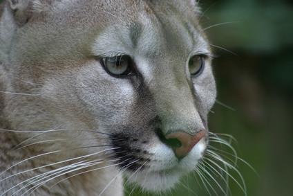 Farlige dyr i Florida