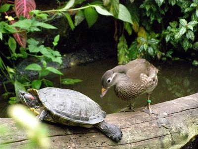 Forskjeller mellom Krypdyr og fugler