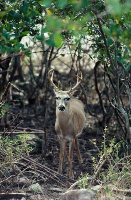 Hva slags grønnsaker Deer spise?