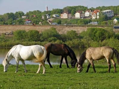 Hvor fort en hest Run?