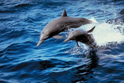 Mat som en delfin Eats
