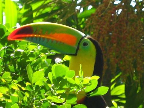 Informasjon om Jungle Blomster og Fugler