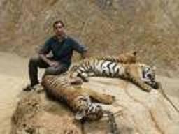 Hvordan Tigers sove?