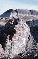 Hva er en Petrified Fossil?