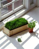 Prosjekter for Kids om fotosyntese
