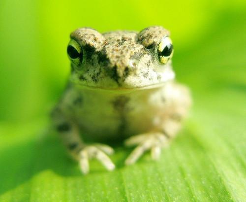 Informasjon om Frog Skins