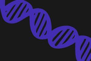 Hvordan lage DNA-modellene bruk av papir