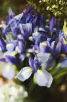 Blomster for å dekorere en brude Markise