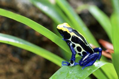 Deadly dyr som lever i regnskogen