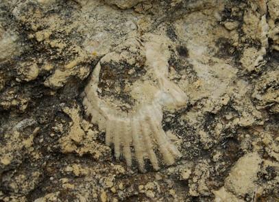 Hvor befinner Fossiler i Missouri