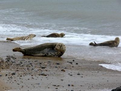 Hvordan Seals forsvare seg?