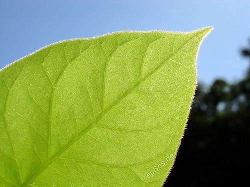 Hva skjer under Stage One of Fotosyntese?