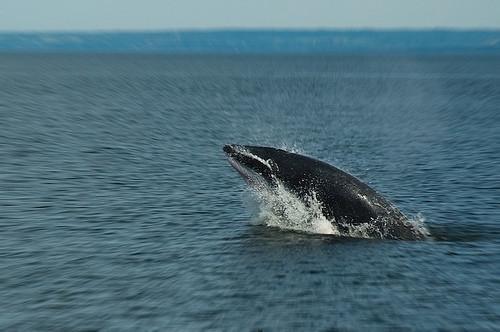 Hvalenes naturlige habitat