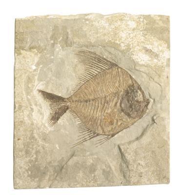 Typer av Fossil Rocks