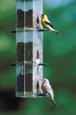 Hvordan få fugler og dyr på din veranda