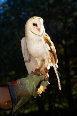 Hva er Owl Pellets brukes til?