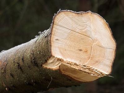 Hva Er Timber krydder?
