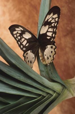 Likheter og forskjeller mellom møll og sommerfugler