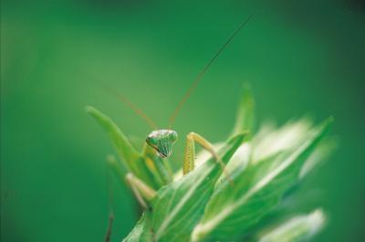 Hyppigheten av lyder som insekter kan høre