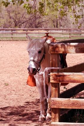 Forskjellen mellom Pony & Horse vestlige Saddles