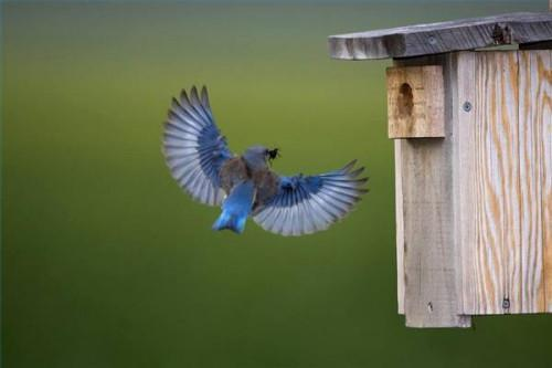 Hva Pole bør du bruke for en Blue Bird House?