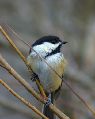 Hvordan identifisere Eggs of Wild California Birds