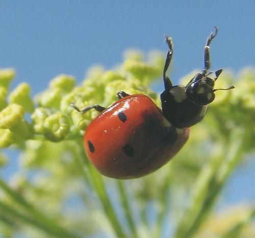 Lady Bugs Habitat