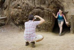 California Redwood gave ideer