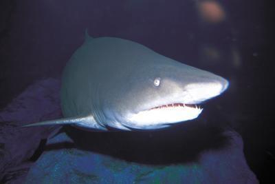 Hva er de tre kategorier av dyr som lever i havet?